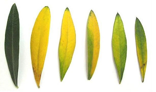 AgroPublic | N olive